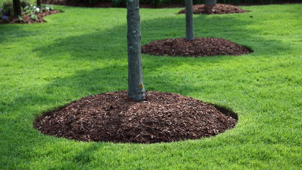 Mulch surrounding a planted tree